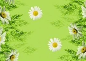 Бязь о/м пл 140 рис 1480-1 Ромашки зеленый